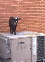 Abigail on the HVAC unit