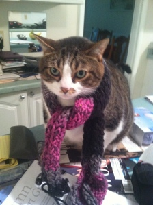 Toby in a scarf