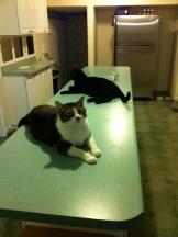 Cats-Island-8-21-2011