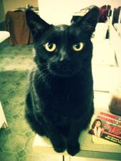 Henry-01-04-2012