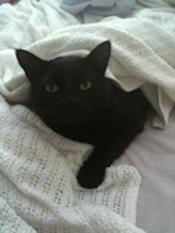 Henry-Cute-Kitten
