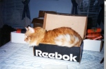 RockyBox