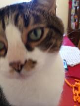 Sweet-Toby