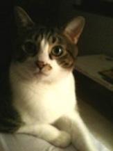 Toby-Cute-Kitten