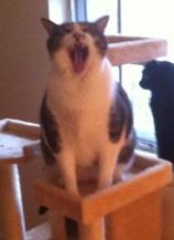 Toby-Prolific-Yawn